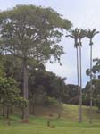 Botanical Gardens - Entebbe