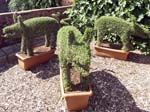 The Topiary Pigs