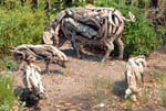 WTB - Cork Pigs by Heather Jansch