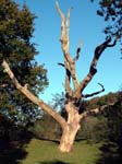 Dead Tree, Eyeworth