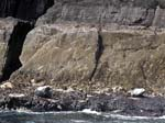 Seals - Small Skellig