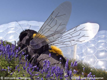 Eden Project,Bee,Robert Bradford,Sculpture,Statue