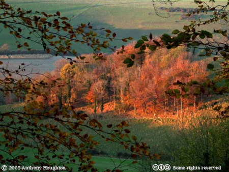 Compton Abbas,Littlecombe Bottom,Fontmell Magna,Trees,Sunset