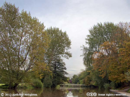 River Stour,Canford Magna,Trees