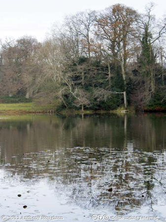 Lake,Dinton Park,Lake,Trees