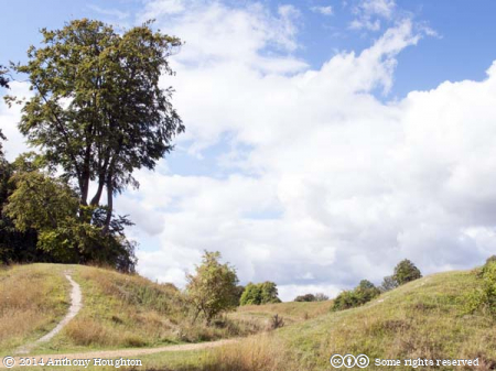 Entrance,Danebury Hill Fort,Iron Age,Trees