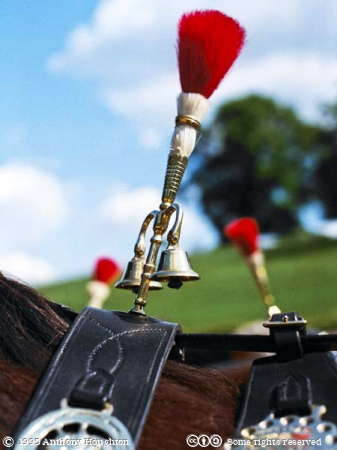 Cart,Heavy Horse,Harness,Pommel