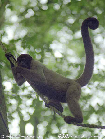 Looe,Woolly Monkey Sanctuary,Animal