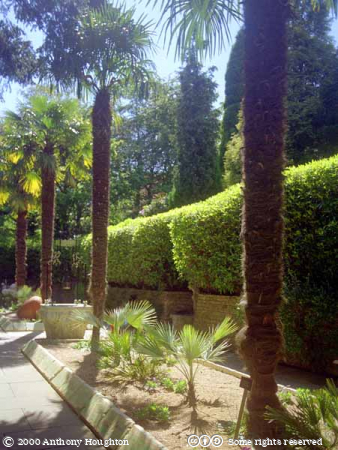 Palm Court,Poole,Compton Acres Gardens,Egyptian,Palms