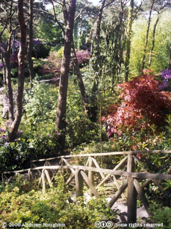 Wooded Valley,Poole,Compton Acres Gardens,Wild Walk,Trees